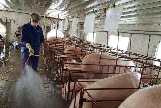 Xịt rửa chuồng trại chăn nuôi quy mô lớn