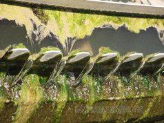 rong tảo trong tháp giải nhiệt